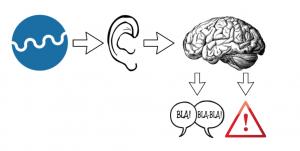 Le système de transmission des sons de l'oreille externe au cerveau
