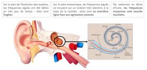 l'atteinte auditive des fréquences aigues dans le trouble presbyacousique